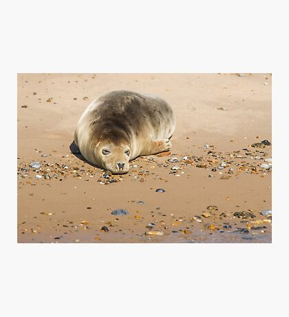 Seal Snoozing on Blakeney Point Photographic Print