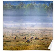 Grazing in the Morning Mist Poster