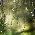 bee-eater in dreamland by nadine henley