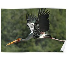 """The flight of the Painted Stork"" Poster"