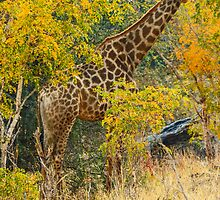 Giraffe in Ordeal trees by Linda Sparks