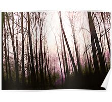 Enchanting forest... Poster