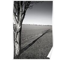Silver Birch (Purwell Fields - Hitchin, Hertfordshire) Poster