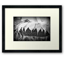 Dying Sunflower Framed Print