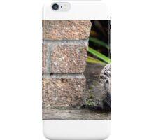 Garden hedgehog iPhone Case/Skin