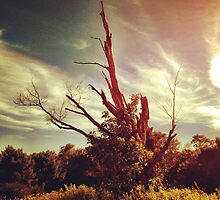 Lone tree by BrittneyMarie83