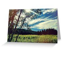 Upstate Field & white birch  Greeting Card