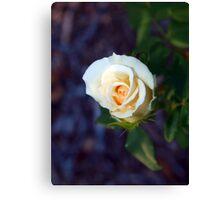 Light yellow rose Canvas Print