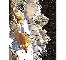 Bark Photographic Print