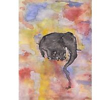 Fritz The Elephant Photographic Print