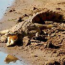 NOT NICE! - THE NILE CROCODILE – Crocodylus niloticus - Nyl Krokedil - PLEASE VIEW IN LARGE! by Magaret Meintjes