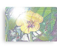 Nasturtium in sunlight Canvas Print