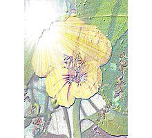 Sunlight on nasturtium Photographic Print