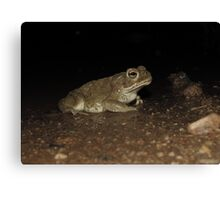 Sonoran Desert Toad (Colorado River Toad) Canvas Print