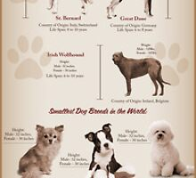 All about Dogs And Their Different Breeds by emersonrose