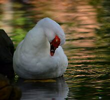 Sunset on the Pond by Linda Cutche