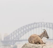 Goat by Mira Fertin