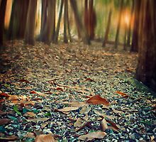 Autumn Carpet by Citizen