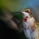 Hummingbird Portrait by Janice Carter