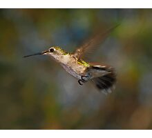 Flying By Photographic Print