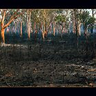 Fire Nutt by vilaro Images