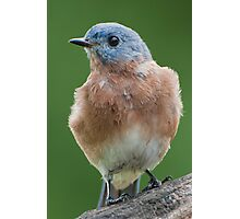 Bluebird Visit Photographic Print