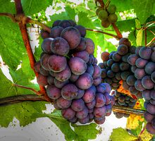 The Fruit of the Vine (Grapes) by Charles & Patricia   Harkins ~ Picture Oregon