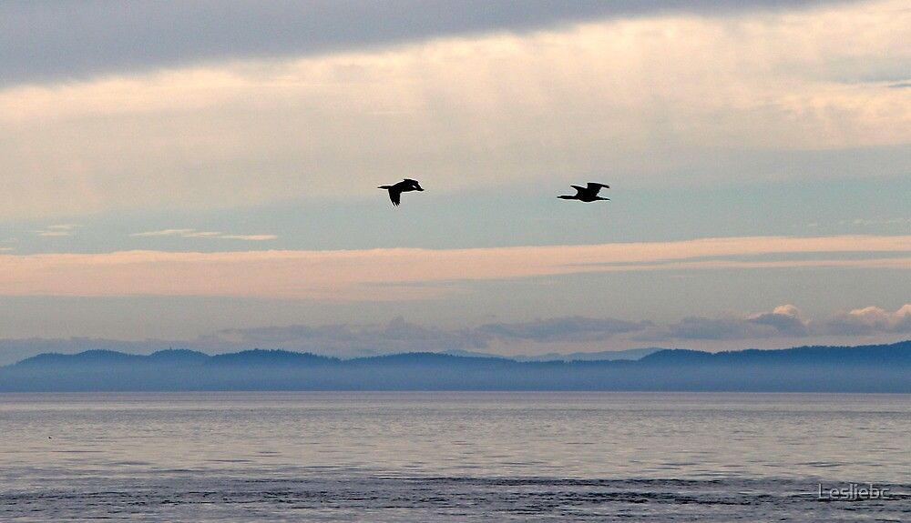 Cormorants in the Clouds by Lesliebc