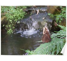 Butterfly By A Waterfall Poster
