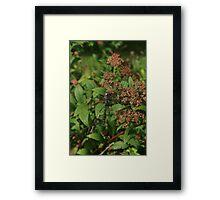 Dragonfly on Purple Bush Framed Print