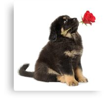 Puppy with a rose looking up Canvas Print