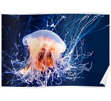 Lion's Mane Jellyfish Poster