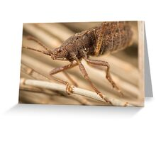 'Brown Shield Bug (a.k.a Stink Beetle)' Greeting Card