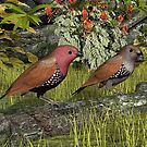 Pink-throated Twinspot by Walter Colvin