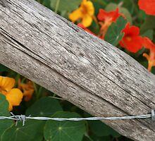 Barbed Wire Fence and Flowers by rhamm