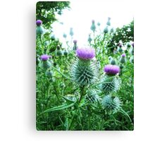 thistle's Canvas Print