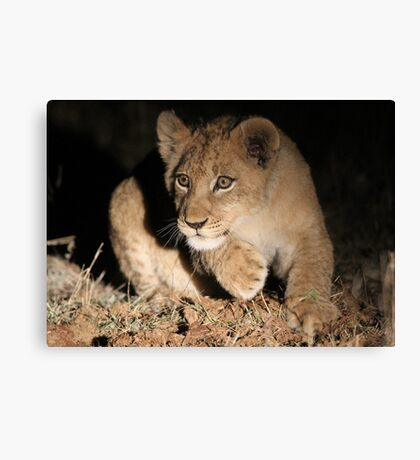 Cub action!! Canvas Print