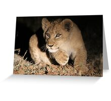 Cub action!! Greeting Card