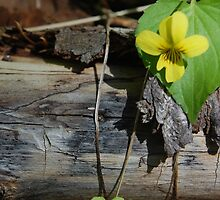 yellow violet. by AnjiMarth