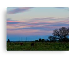 Cattle at Dusk Canvas Print