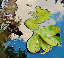 Lily Pad Frogger by Christine Demaray-Brown