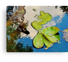 Lily Pad Frogger Canvas Print