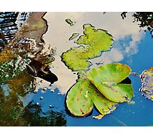 Lily Pad Frogger Photographic Print