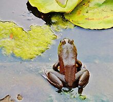 Frog in a Pond by Christine Demaray-Brown