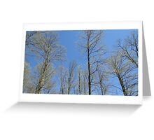 Maple Spring Time Greeting Card
