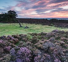 Stanton Moor Leaning Tree by James Grant