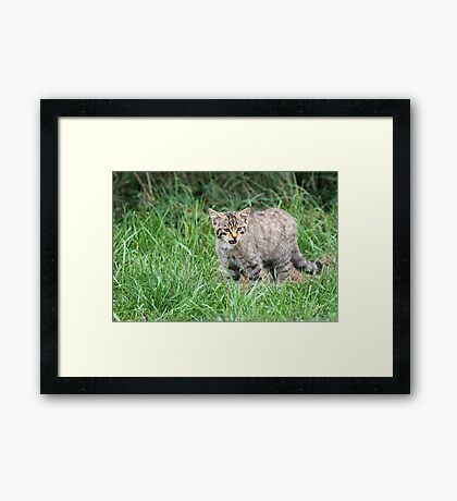 Wildcat Kitten Framed Print