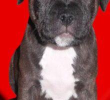 Staffy puppy Sticker