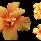 Yellow Hibiscus  by Madalena Lobao-Tello