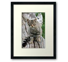 Wildcat Kit Framed Print